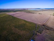Coutryside Planted With The Direct Sowing Method, Pampas,Argentina