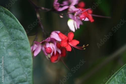 Fotografie, Tablou  Java glory bean