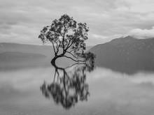 Wanaka Tree Black And White Silhouette, New Zealand