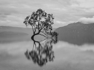 Obraz na SzkleWanaka Tree Black and White Silhouette, New Zealand