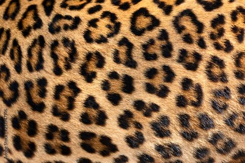 Canvas Prints Leopard Detail skin of leopard.