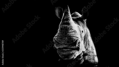 Spoed Foto op Canvas Neushoorn Portrait of a smiling rhinoceros on a black background