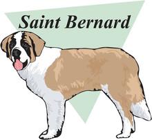 Saint Bernard Vector Illustration