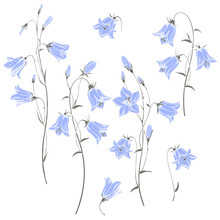 Bluebell Flowers. Hand Drawn V...