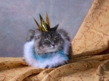 Princess Kitty  In Crown On The Carnival