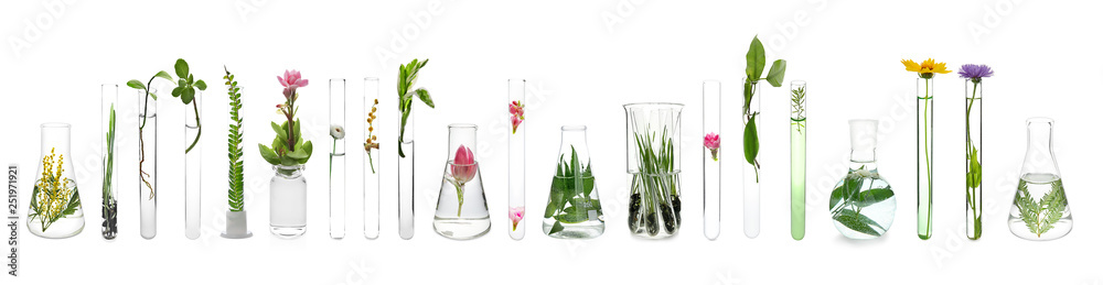 Fototapeta Laboratory glassware with plants on white background