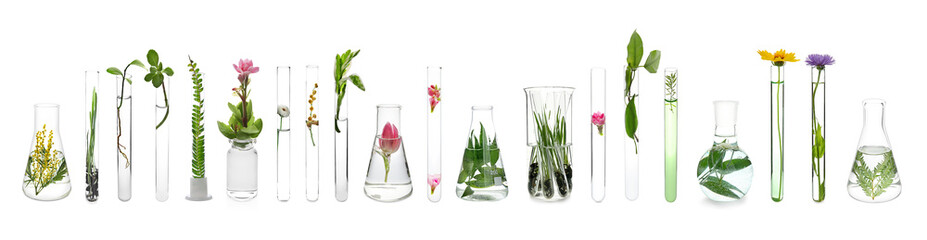 Panel Szklany Do szkoły Laboratory glassware with plants on white background