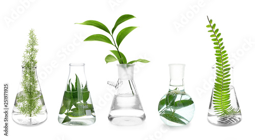 Poster Vegetal Laboratory flasks with plants on white background
