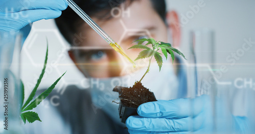 Photo  Portrait of scientist with mask and gloves checking and analyzing with a droplet a biological and ecological hemp plant used for herbal pharmaceutical cbd oil in a laboratory