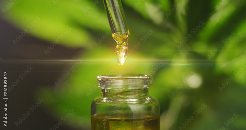 Fototapeta Macro close up of droplet dosing a biological and ecological hemp plant herbal pharmaceutical cbd oil from a jar.