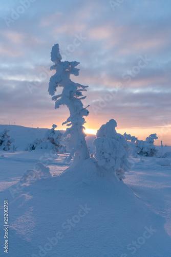 Tuinposter Wintersporten Snow covered trees on Levi Ski Resort in Kittilä Finland