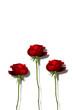 3本の赤い薔薇の花
