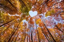 Shape Of Heart In Treetops Of Colored Beeches