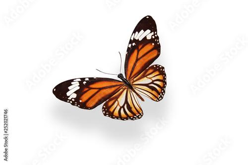 Fotografie, Obraz  butterfly Danaus plexippus. isolated on white background