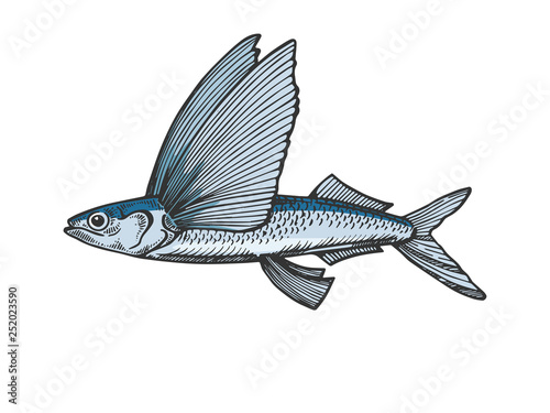 Photo Flying fish animal color sketch engraving vector illustration