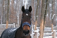 Horse In Paddock  In The Snow In Winter