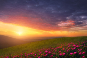 Fototapetaspring background with beautiful landscape with flowers at sunset