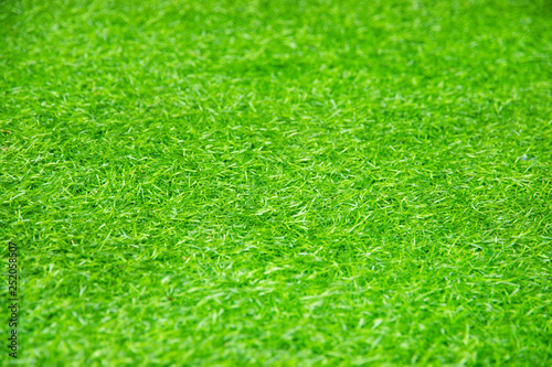 Foto op Plexiglas Weide, Moeras green grass texture as background.