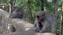 Two Monkeys Sleeping The Head Down Between The Knees While Sitting On  A Railing
