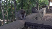 Two Monkeys Sleeping The Head Down Between The Knees While Sitting On A Stone Ra