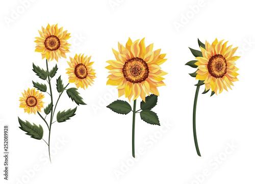 Obraz na plátně set exotic sunflowers plants with leaves