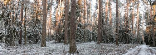 Zimowa panorama lasu w śniegu o poranku - fototapety na wymiar