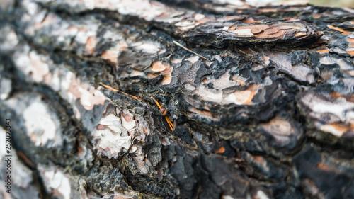 Fotografie, Obraz  schwarz weiße Rinde eines Baumes