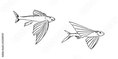 Photo Flying fish
