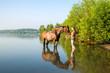 Mädchen mit Pferd im See