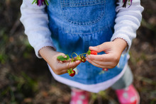 Hands Of Little Girl Holding W...