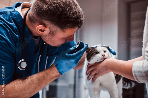 Photo Veterinarian examining cat ear infection with an otoscope in a vet clinic