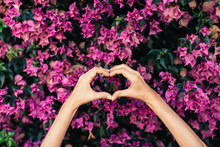Woman's Hands Shaping Heart In Front Of Pink Blossoms