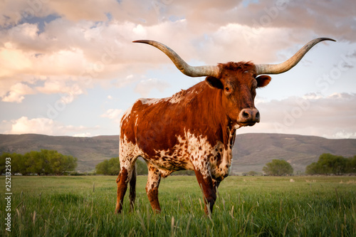 Poster Texas Texas Longhorn