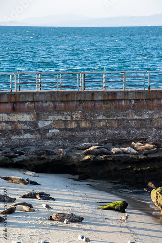 Fotografie, Obraz  Sea lions resting with seagulss on La Jolla Beach