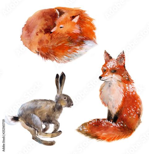 zestaw-zajac-i-dwa-lisy-akwarela