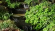 waterfall with clear water flowing and fresh green plants