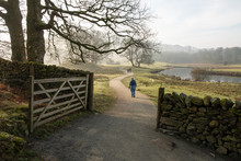 People And Dogs Seen Through An Open Gate On The Path Between Elterwater And Skelwith Bridge, Lake District, UK