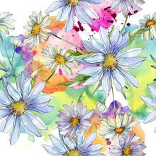 Daisy Floral Botanical Flower....