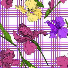 Vector Yellow, Purple And Maroon Iris Floral Botanical Flower. Engraved Ink Art. Seamless Background Pattern.