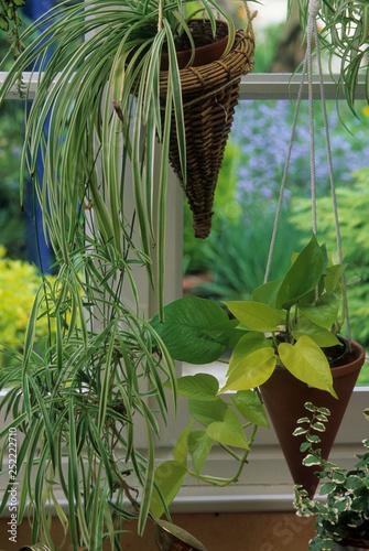 Photo Plantes vertes en suspension
