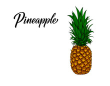 Vintage Pineapple In Hand-drawn Sketch Style Isolated On White Background. Graphic Art Of Exotic Tropical Fruit. Vector Tropical Summer Fruit - Ananas Illustration With Pineapple Lettering.