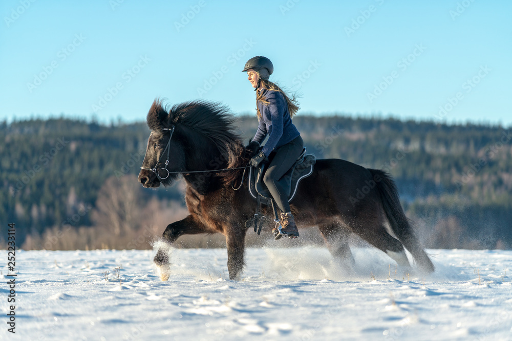 Fototapety, obrazy: Swedish girl riding her Icelandic horse in deep snow and sunlight