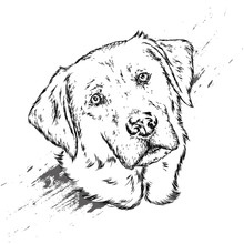 Portrait Of A Dog Or Puppy. Vector Illustration For Greeting Card Or Poster, Print On Clothes.