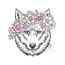 A Beautiful Wolf Or Dog In A W...