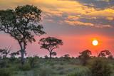Fototapeta Sawanna - African sun  over Savanna plain