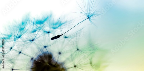 Spoed Foto op Canvas Paardenbloem dandelion on blue background