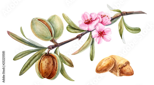 Photo watercolor almond branch