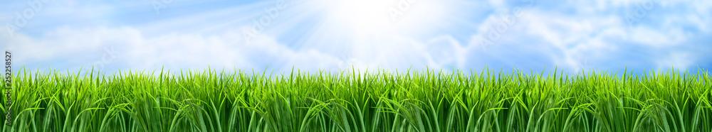 Fototapeta Zielona trawa panorama krajobrazu
