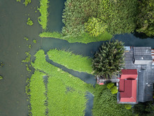 Aerial View Of Water Hyacinth Cover A River In Thailand