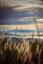 Reed Grass With Beautiful Mountain Peak At Sunset